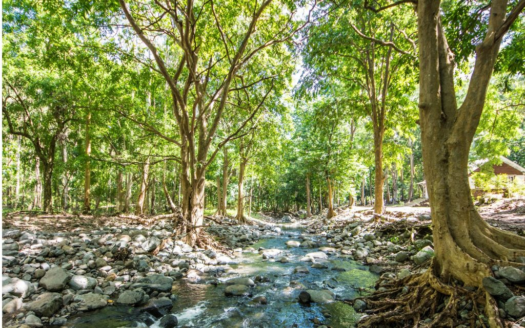 Nature Mauritius - - Top 5 Activities to do in Mauritius - Living in Mauritius Island