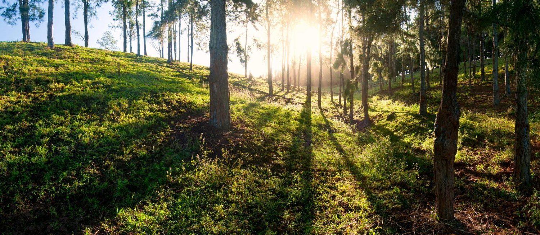 eritage Nature Reserve Bel Ombre